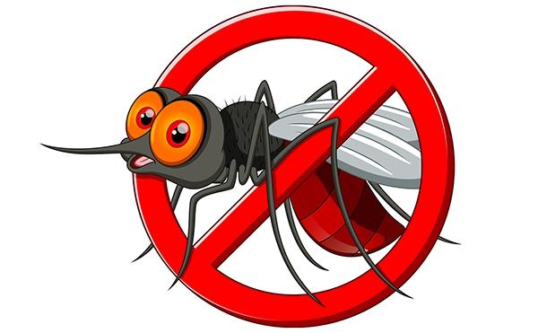 komary przenosza borelioze